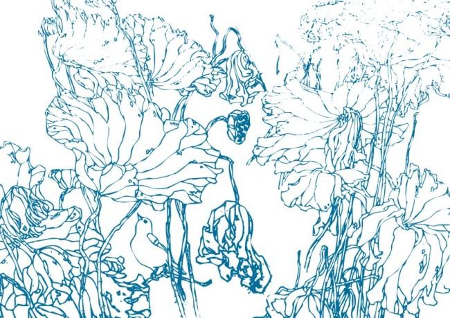 钢笔画 线条画 美工画 手描画 插画 画 工笔画 国画 白描图 古画 荷花