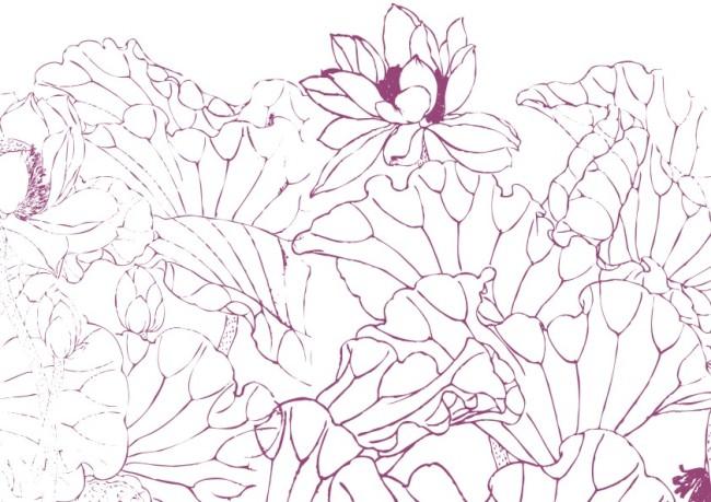 花纹插画 > 芙蓉花叶-手描画  关键词: 矢量 素材 白描画 素描画 手绘