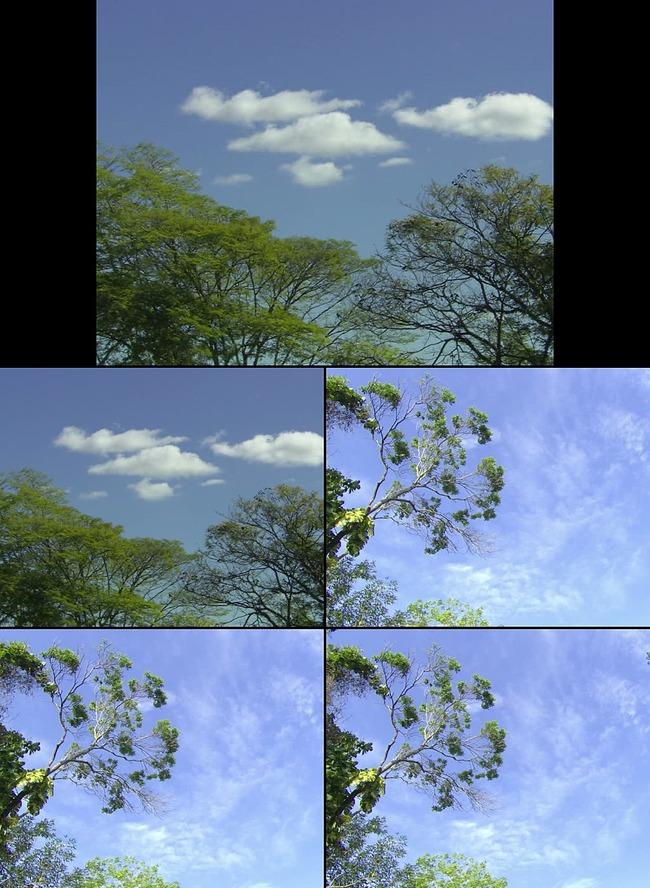 【mov】蓝色天空下的大自然实拍素材