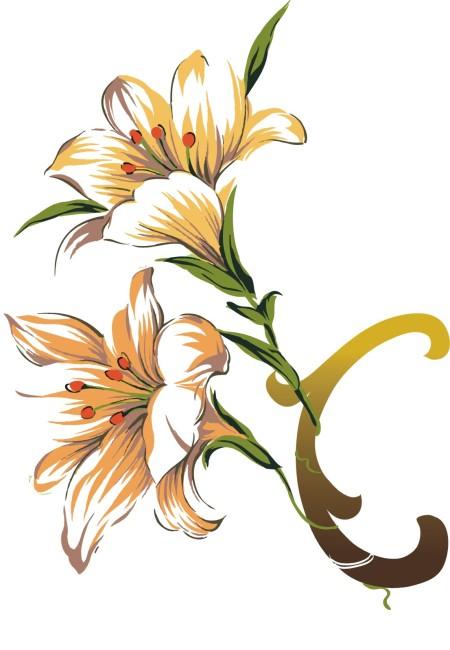 花瓣 花卉 花边边框