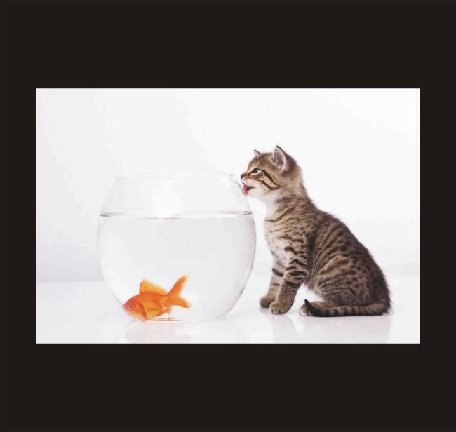 【cdr】可爱的小猫 猫和鱼