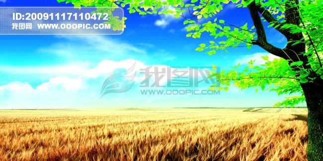 树 小麦 白云 农业展板 种子展板 展板 企业展板 服务农业展板 麦田