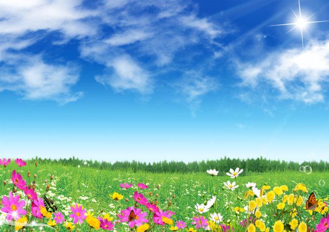 背景图 风景画 背景素材 花 花朵 春天 春天背景 一望无际 清爽 蓝色