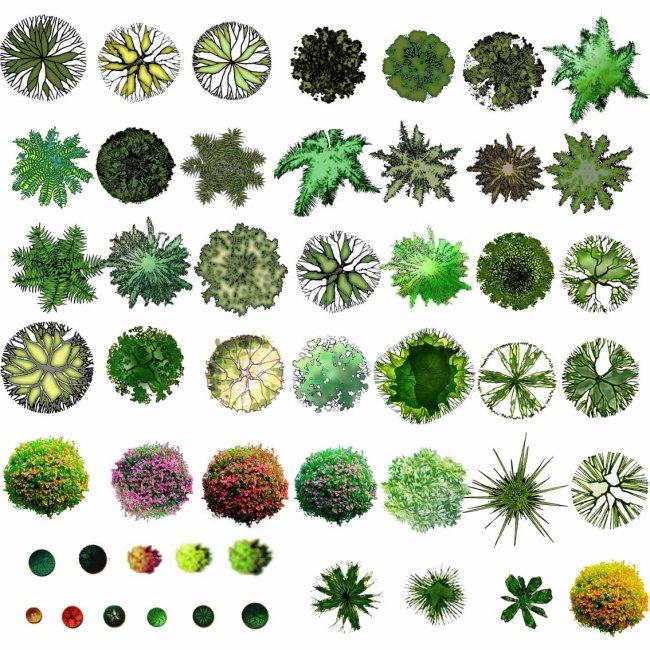 【psd】49种ps植物平面图