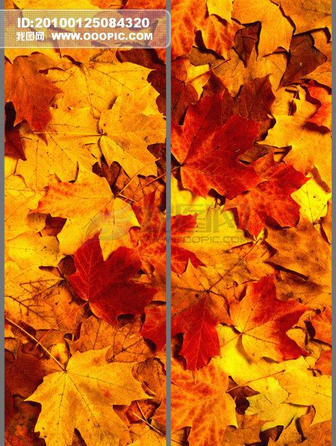 移门衣橱图片 移门图片大全 秋 秋天 秋季 秋叶 秋装 说明:风景枫叶二