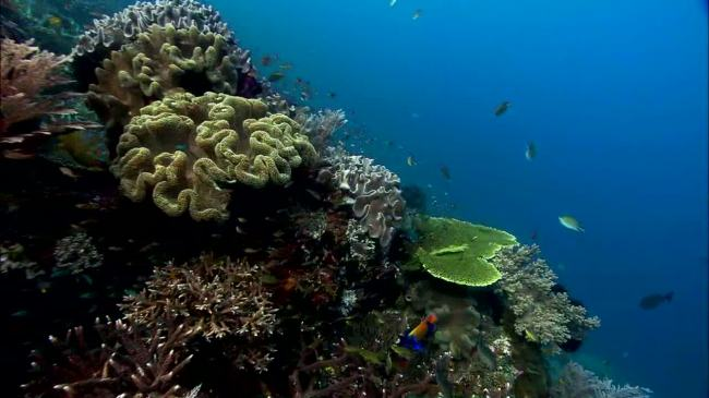 【avi】实拍海底世界中的珊瑚群和游动中的鱼