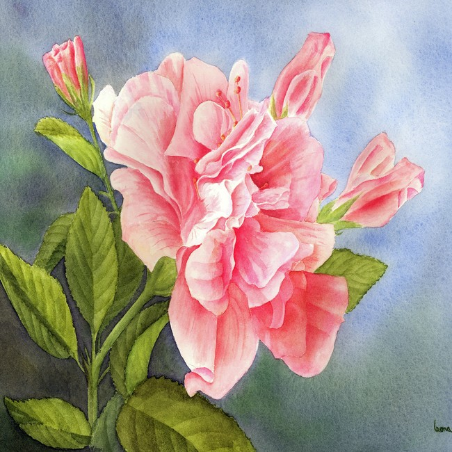 一朵盛开的红色玫瑰油画图片