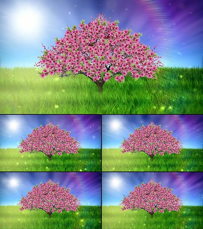 动态视频素材 > 春天桃花  关键词: 唯美 景色 春天 美景 风景 风光