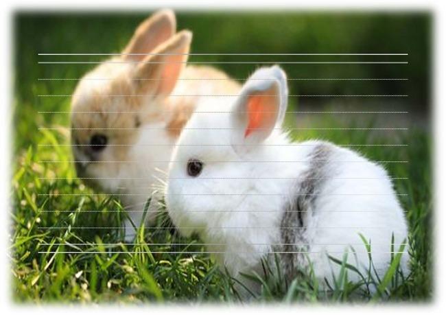 【】动物系列信纸模板可爱兔子