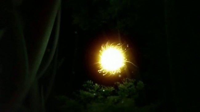 【mov】led视频背景萤火虫生命森林黑夜