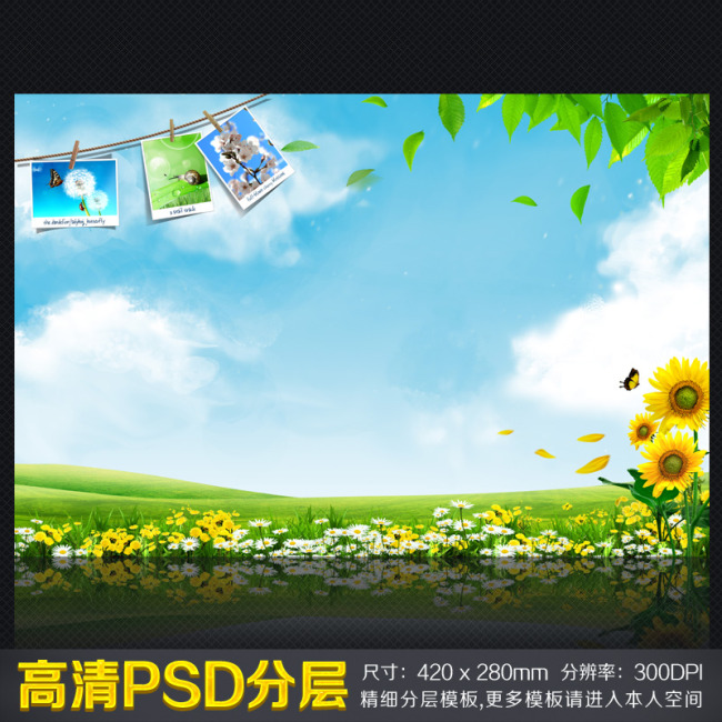 > 向日葵照片晾衣绳展示背景展板  关键词: 环境保护展板图片模板下载