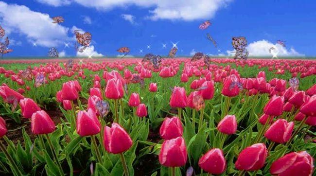 玫瑰花丛上飞舞的蝴蝶