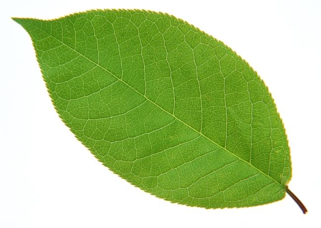 幼儿园歌曲树叶图谱