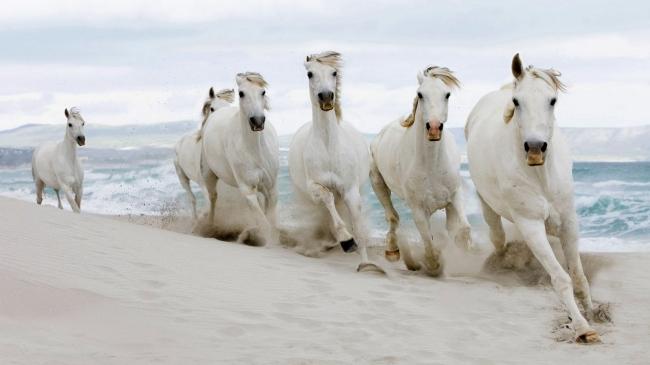 主页 原创专区 其它模板 其他模板 > 沙滩骏马风景图  关键词: 白马图片