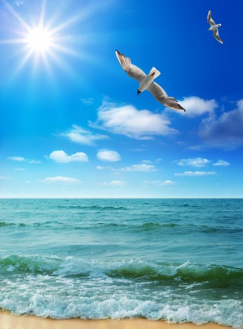 春天里陽光大海山水自然風景頭像