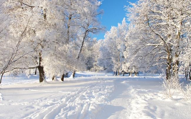 【jpg】冬天 树林 雪景 风景图片
