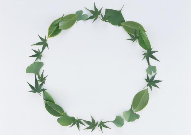 【jpg】树叶边框 植物边框