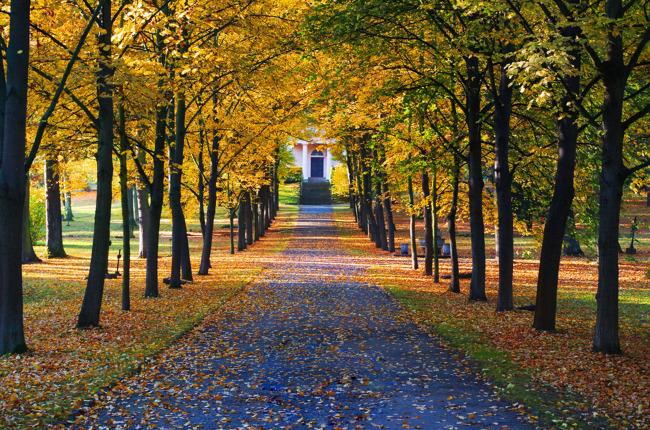 原创专区 其它模板 其他模板 > 秋天风景  关键词: 秋天的树 树林