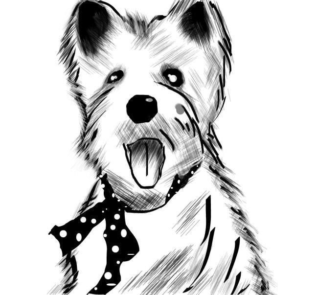 【jpg】黑白素材素描风格狗宠物jpg下载