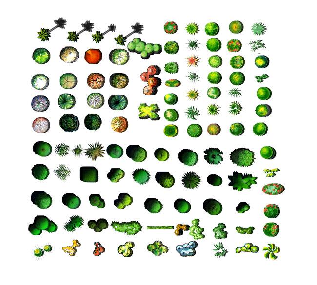 景观规划平面树模板下载 景观规划平面树 景观 规划 平面彩图 树 植物