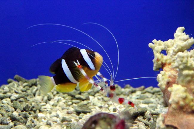 壁纸 动物 海底 海底世界 海洋馆 水族馆 鱼 鱼类 650_433