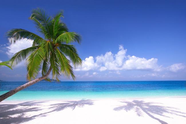 【無】現代清新開闊海景椰子樹海灘風景圖高清大圖
