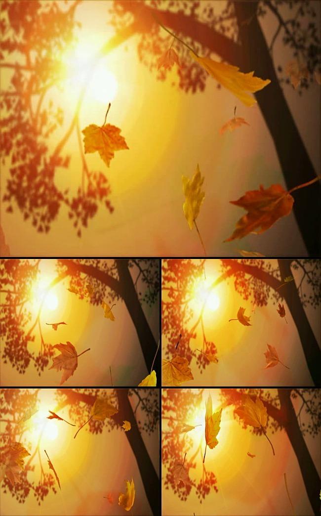 【avi】秋天树叶飘落动态视频背景素材图片