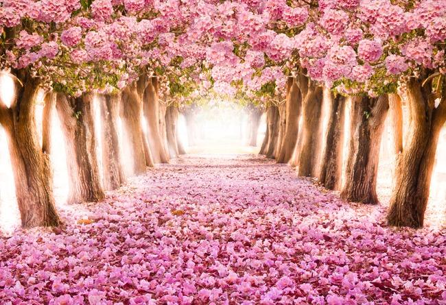 路 树叶 樱花 仙鹤 鹤舞樱花 树 红叶 现代 风景 说明:3d立体窗外美景